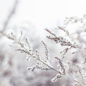 YogaBlick - Winter Yoga Retreat Mosel 2019